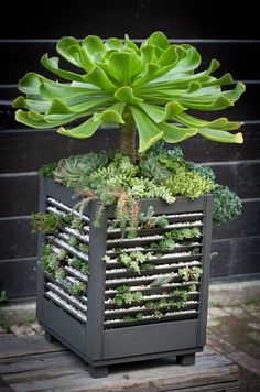 Sedum planter made from window shutters.