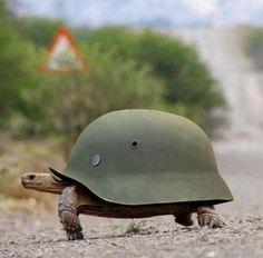Army helmet on a tort. Love it!