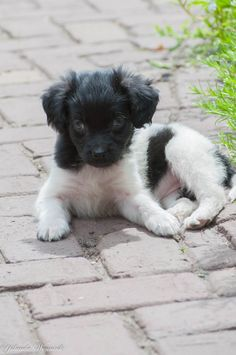 Puppy Silke Kom Achterom
