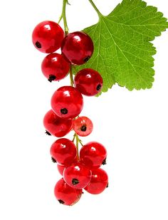 If I were a Wood Elf I'd wear redcurrant earrings Wood Elf, Red And White, Flora, Fruit, Earrings, Nature, Summer, Pictures, Vitamins