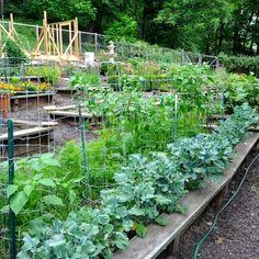 Take A Tour Through A Colorful Backyard Victory Garden!