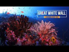 Great White Wall, Fiji - YouTube Fiji Islands, The Great White, Soft Corals, White Walls, Youtube, Off White Walls, Youtubers, Youtube Movies, Fiji