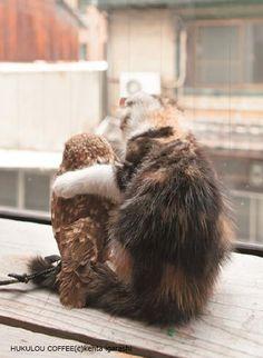 子ネコとフクロウが仲良しに!…写真集『フクとマリモ』は、もふもふとモッフモフの出会い