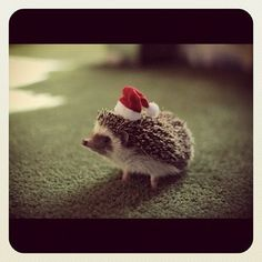 christmas hedgehog, so cute