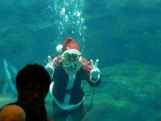 Santa in water