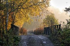 Fot. Franciszek Długajczyk – Tychy - Most na Mlecznej lasy pod Czułowem