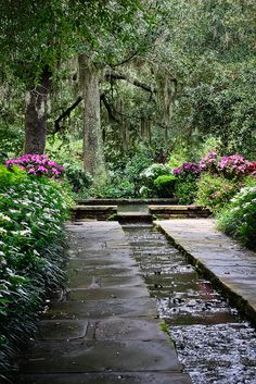 Beauty in the garden - Theodore, Alabama