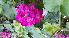 [스바냐][습]3:14시온의 딸아 노래할지어다 이스라엘아 기쁘게 부를지어다 예루살렘 딸아 전심으로 기뻐하며 즐거워할지어다 [Zephaniah] 3:14Sing, O daughter of Zion; shout, O Israel; be glad and rejoice with all the heart, O daughter of Jerusalem.