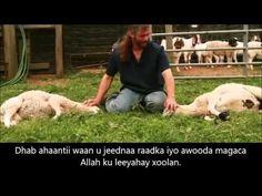 Mucjisad Xoolaha Xalaasha ah. www.gaaldiid.com