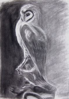 owl pictures | Still life drawing of owl using pencil and charcoal.