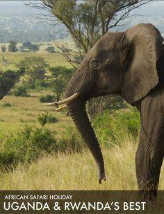 African Safari Tour 2015: Uganda and Rwanda's Best