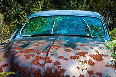 un vieux cimetiere de voitures en suede 13   Un vieux cimetière de voitures en Suède   voiture vintage Suède seconde guerre mondiale photo m...