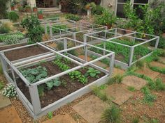 Square foot gardeing / raised bed gardening / protected with screened frames