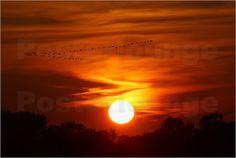 Martina Cross - Sonnenuntergang mit Gänsen
