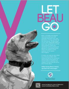 RADIO WMZQ'S MICHAEL J SPEAKS FOR BEAU: : If you are following the story of Beau , a 3 year yellow lab in Dyersburg, Tennessee, you may know b