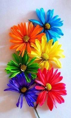 Love Rainbow, Taste The Rainbow, Over The Rainbow, Rainbow Colors, Happy Colors, True Colors, All The Colors, Vibrant Colors, Colorful Flowers