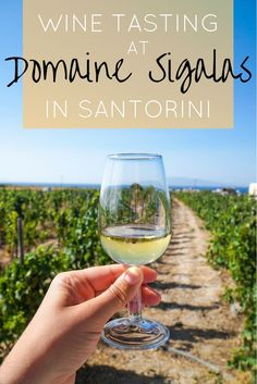 A Day Domaine Sigalas in Santorini | The Republic of Rose