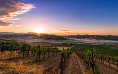 Download wallpapers vineyards, morning, sunrise, fog, Tuscany, Italy