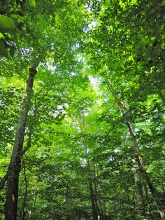 Unsung #Destinations: 10 reasons to visit #Ithaca, #New York. Five & Six: #cornell #labofornithology & #sapsucker woods. www.gold-boat.com