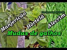 ALECRIM: COMO PLANTAR COM SUCESSO - SUPER FÁCIL - PASSO A PASSO - YouTube
