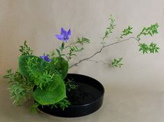 a blog about ikebana, flowers, and life in japan. join me on my journey as i learn and teach others about ikebana.