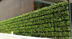Live Plants Create A Soothing Environment In Your Home or Office | Plantscapers. Living wall.