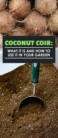 Coconut coir is an amazing growing medium for hydroponic and indoor use. Find out what it is how it&; Coconut coir is an amazing growing medium for hydroponic and indoor use. Find out what it is how it&; Aquaponics System, Hydroponic Farming, Hydroponic Growing, Aquaponics Diy, Aquaponics Greenhouse, Organic Gardening, Gardening Tips, Vegetable Gardening, Organic Farming