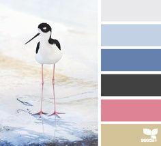 LOVE this color scheme: design seeds