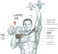 Elevaciones laterales de los brazos con mancuernas.