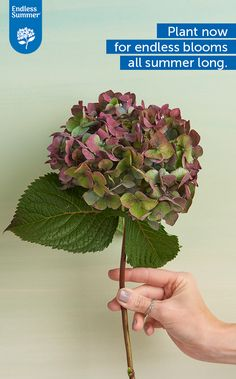 BloomStruck will boast big, beautiful blooms all summer long.