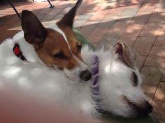 Bella and Peanut
