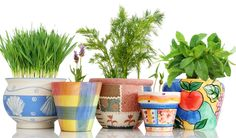 The best tips for growing herbs in pots. How to start both an indoor potted herb garden, and tips for growing herbs outdoors in containers. Indoor Vegetable Gardening, Hydroponic Gardening, Hydroponics, Organic Gardening, Gardening Tips, Kitchen Gardening, Gardening Books, Growing Herbs In Pots, Growing Vegetables