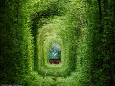 Abandoned tunnel of Love - Ukraine