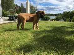 9 weeks and growing strong