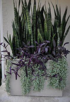 """3 """"Dream Team's"""" Portland Garden Garden Design , - Bepflanzung Succulents Garden, Garden Pots, Potted Garden, Garden Bed, Succulent Pots, Succulent Outdoor, Ferns Garden, Garden Shrubs, Easy Garden"""