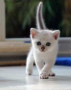 Meow I'm gorgeous