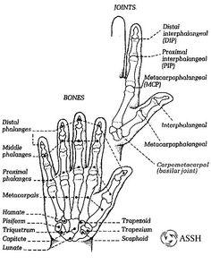 spine diagrams vintage
