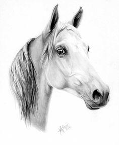 Pencil Drawings Of Horses On Hind Legs Arabian Horse Drawings - 650x790 - jpeg