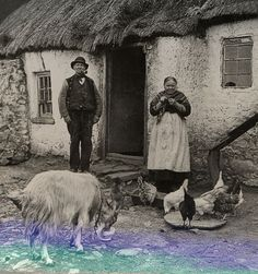 Irish Cottage - #goatvet and the goat makes it complete
