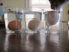 Egg Test: Laying on the bottom = fresh. Touching the bottom = Good, not fresh Floating = Bad, don't use. Devon, Egg Test, Floating Eggs, Things To Know, Good Things, Bad Eggs, Breakfast Desayunos, Breakfast Items, Making Life Easier