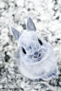 Little Bunny - 50 Cute Bunny Pictures  ♥ !