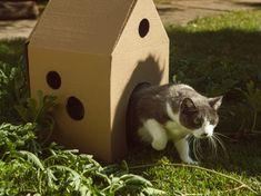 Faça uma casinha para o seu gato em cinco passos