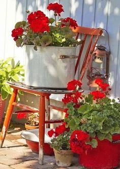 LOVE red geraniums...hurry summer
