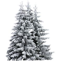 Sd Woodland Winter Trees Liked On Polyvore Featuring Christmas