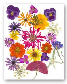52 uses for ~~ pressed flowers! I love pressing flowers and then my mind draws a blank on how to use then. This list really helps!