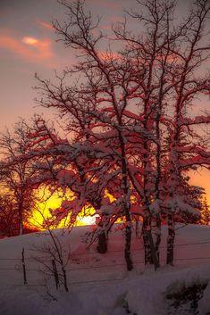 Amazing Nature - Home Winter Sunset, Winter Scenery, Foto Picture, My Sun And Stars, Winter Magic, Snow Scenes, Winter Beauty, Winter Pictures, Winter Landscape