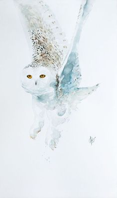 Buy Snowy owl (Bubo scandiacus), Watercolour by Andrzej Rabiega on Artfinder. Discover thousands of other original paintings, prints, sculptures and photography from independent artists.