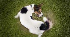 Hyperaktive Hunde