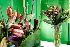 Green Inspiration #Bamboo #Aspidistra www.adomex.nl Green powers!