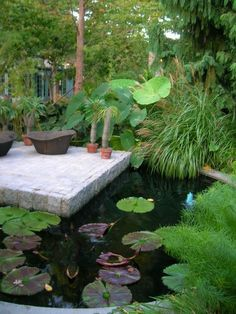 Serenity. Patio resting over koi/garden pond, hidden amongst oversized, tropical plants.